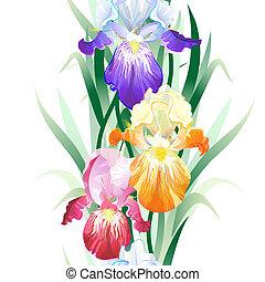 Vector nahtloser Hintergrund mit Iris Blumen.