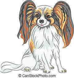 Vector pedigreed dog papillon Rasse