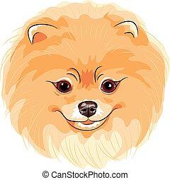 Vector süßer Hund Pomeranian.