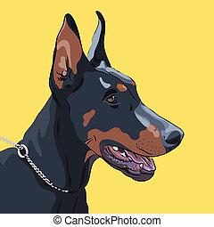 Vector schließt den Hund Doberman Pinscher auf