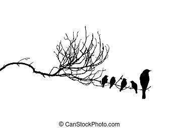 Vector Silhouette der Vögel auf Zweig