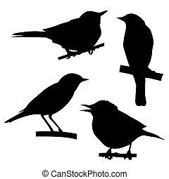 Vector Silhouettes der Vögel, die auf einem Zweig sitzen