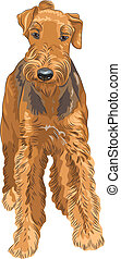 Vector Sketch Dog Airedale Terrier Rasse
