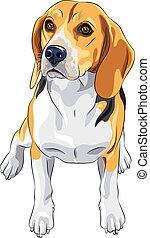Vector Sketch Dog Beagle Züchtung