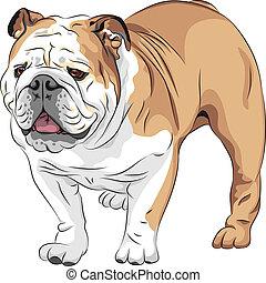 Vector Sketch Dog English Bulldog Rasse