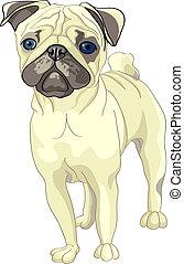Vector Sketch Dog Fawn Pug Rasse