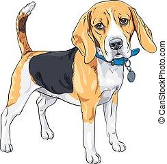 Vector Sketch ernsten Hund Beagle Rasse.