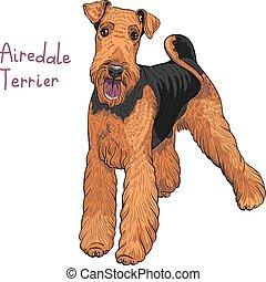 Vector Sketch Hund Airedale Terrier Rasse.