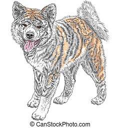 Vector Sketch Hund Akita Inu japanische Rasse Lächeln.
