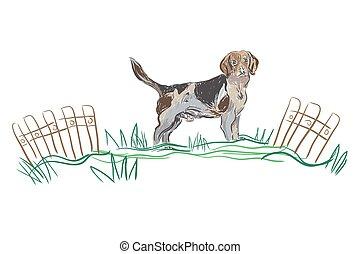 Vector Sketch Hund Beagle Rasse.