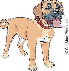 Vector Sketch Hund Boerboel Rasse.