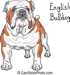 Vector Sketch Hund English Bulldog Rasse.