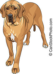 Vector-Sketch-Hund fawn Great Dane Rasse