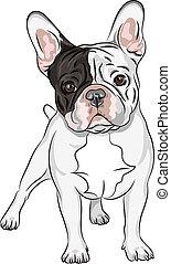 Vector-Sketch-Hund, französische Bulldog-Züchtung