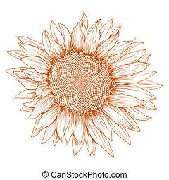 Vector Sonnenblume.