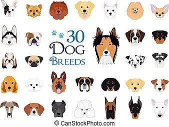 vektor, 30, collection:, rassen, karikatur, style., hund, satz, verschieden