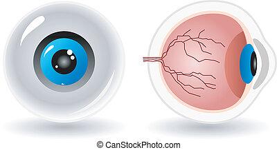 Vektor-Anatomy des menschlichen Auges