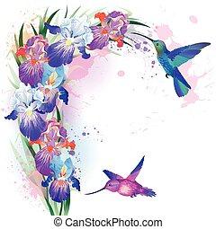 vektor, druck, blumen, kolibris, iris