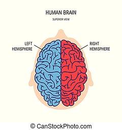 vektor, gehirn, begriff, menschliche