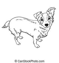 vektor, hund, abbildung