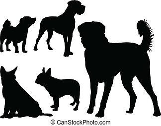 vektor, -, hund, sammlung