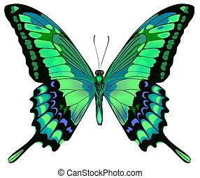 Vektor illustriert den wunderschönen blauen, grünen Schmetterling, isoliert im weißen Hintergrund