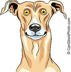 vektor, lächeln, rasse, windhund, hund
