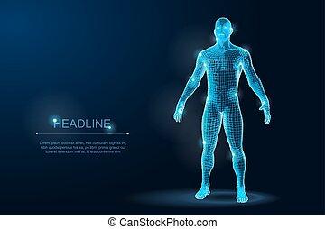 vektor, menschlicher körper, wireframe, polygonal, abbildung, blueprint., 3d