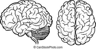 Vektor menschliches Gehirn