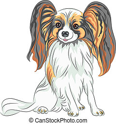 vektor, papillon, pedigreed, rasse, hund