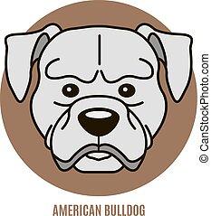 vektor, porträt, bulldog., amerikanische , abbildung