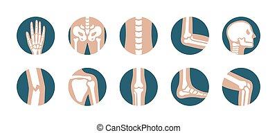 vektor, satz, bein, skelett, gelenke, hintergrund, icons., becken, symbole, orthopädisch, totenschädel, menschlicher fuß, schulterblatt, weißes, hand, ellbogen, knie, bones.