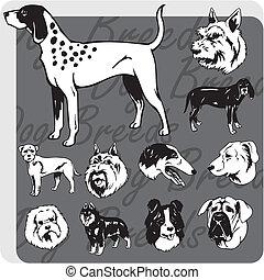 vektor, satz, -, hund, rassen