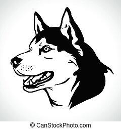 vektor, sibirisch, hund, abbildungsporträt, rasse, heiser