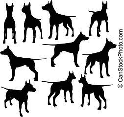 vektor, silhouette, hund, sammlung
