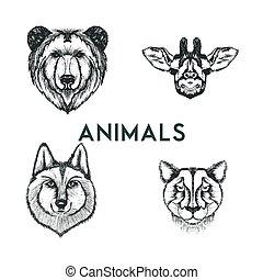 vektor, sketched, wild, gezeichnet, tiere, mündungen, satz