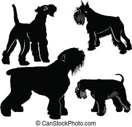 vektor, terrier, collection., schnauzers, satz, hunden, fuchs