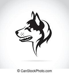 Vektorbild eines Hundes siberianischer Husky auf weißem Hintergrund.