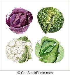 Vektorfarbenes Gemüse. Kohl, Blumenkohl, Savoy