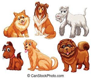 verschieden, arten, hunden