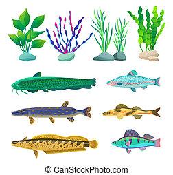 Verschiedene Algen und Meerestiere illustrieren