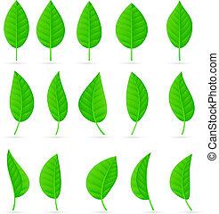 Verschiedene Arten und Formen grüner Blätter