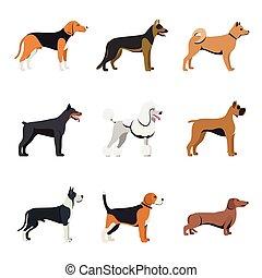 Verschiedene Arten von Hunden Rasse mit Beagle, Deutsche Schäfer, akita inu, Dobermann, Pudel, Boxer, großer Dane und Dachshund. Vektor eingestellt