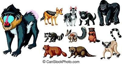 Verschiedene Arten von wilden Tieren.