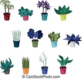Verschiedene Hauspflanzen.