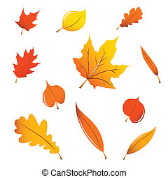 Verschiedene Herbstblätter.