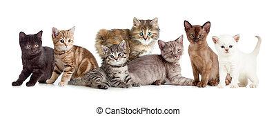 Verschiedene Kätzchen oder Katzen.