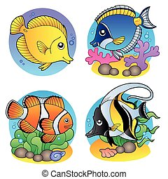 Verschiedene Korallenfische