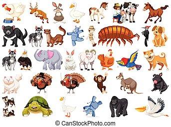 Verschiedene Tiere.