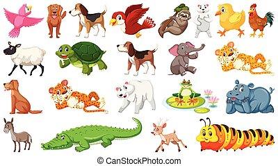 Verschiedene wilde Tiere